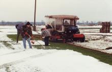 Rasenernte im Winter